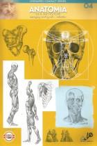 Anatomia dla artystów  04